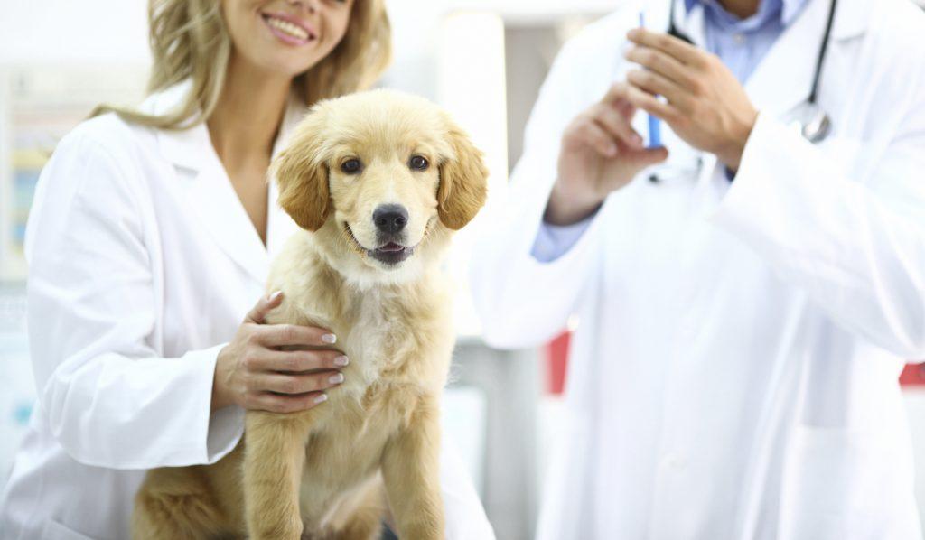 pet-insurance-3